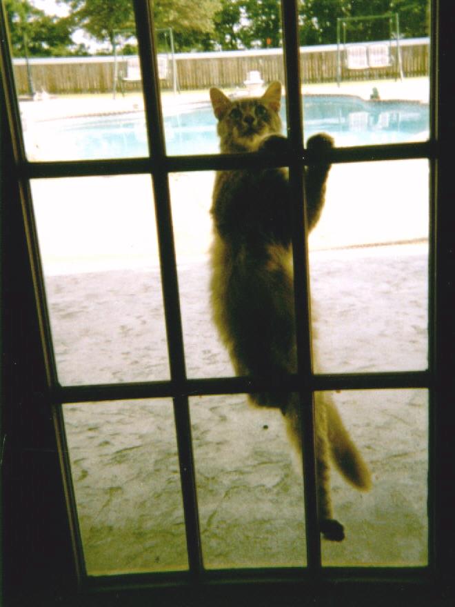 Mama climbing door