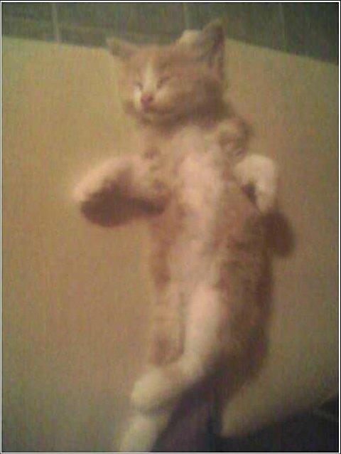 Kung Fu Kitty - TK sleeping