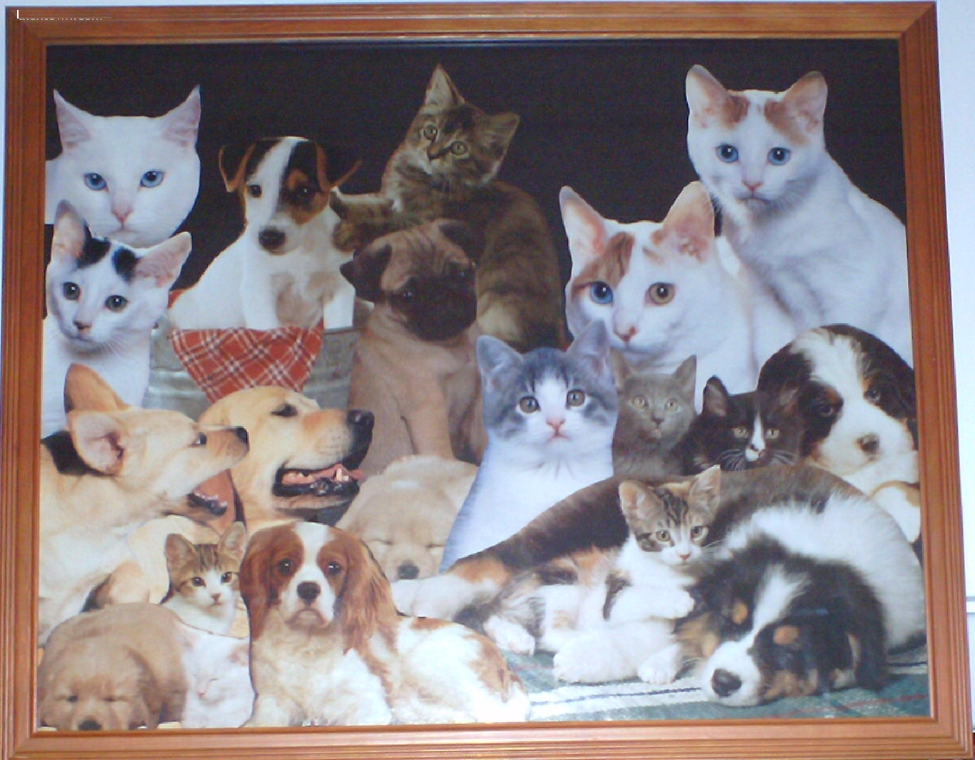 Cat Collage with Kittens and Puppies