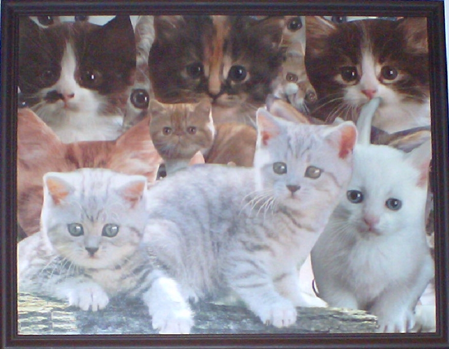 Cat Collages Kitten Puppy Collage Pictures Cut Glue